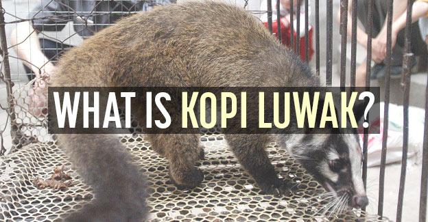 what is kopi luwak
